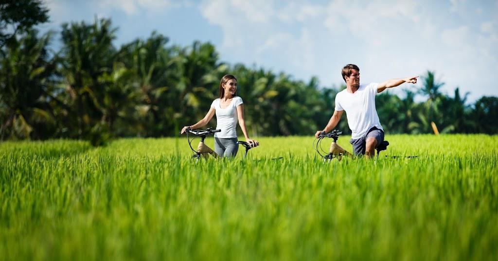 Rice fields around the resort