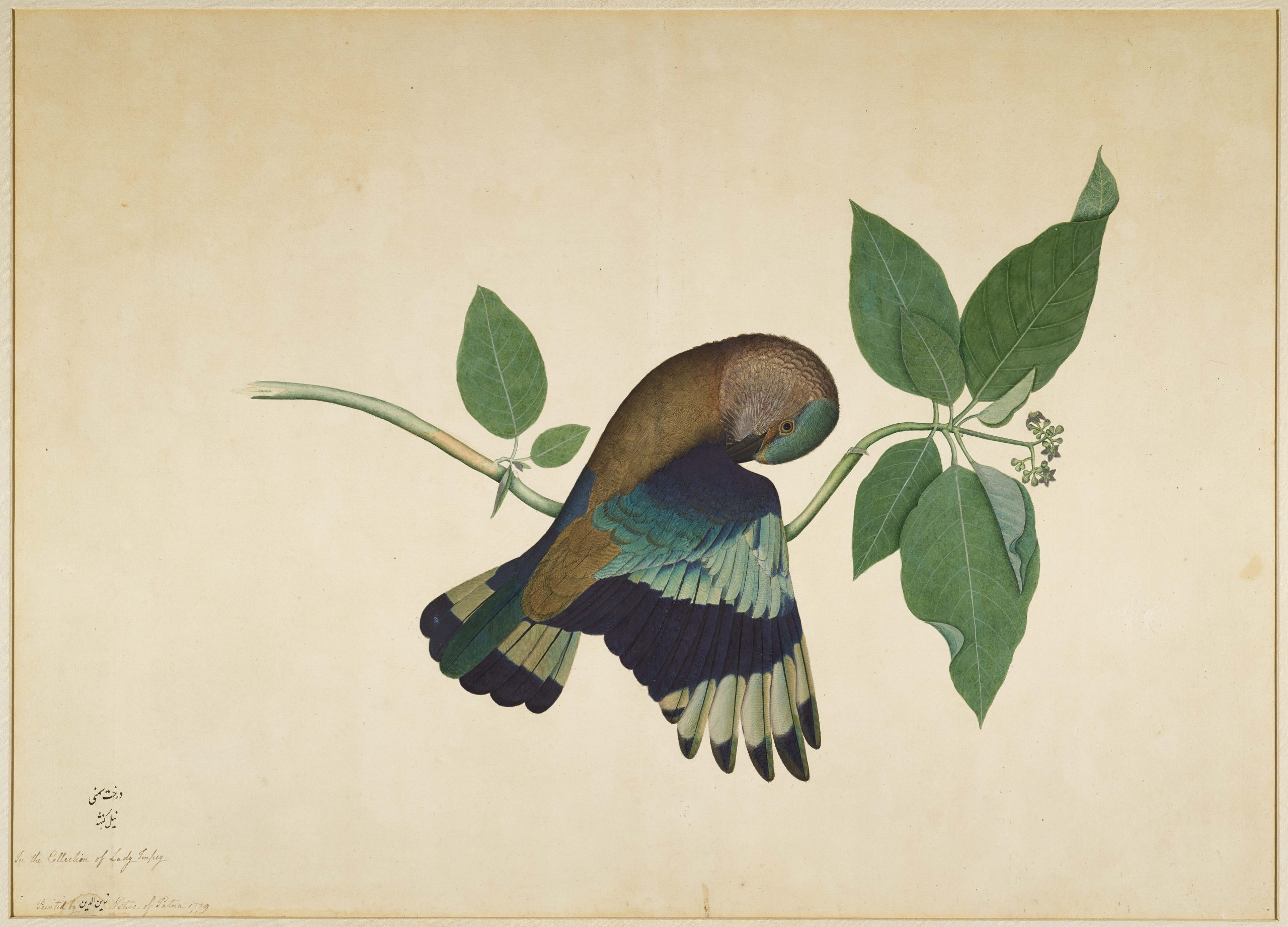 Indian Roller on Sandalwood Branch, Impey Album by Shaikh Zain ud-Din. Source: Wallace Collection