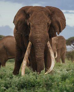 wildlife conservation in Africa