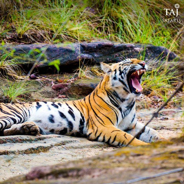 Photo Credit: Taj Safaris/Instagram